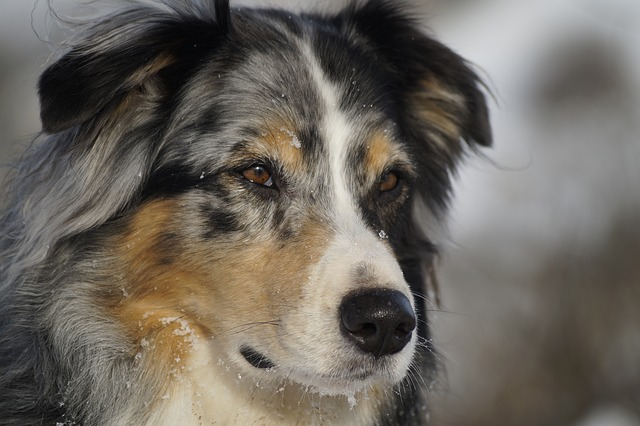 Canine epilepsy can strike without warning or pattern.