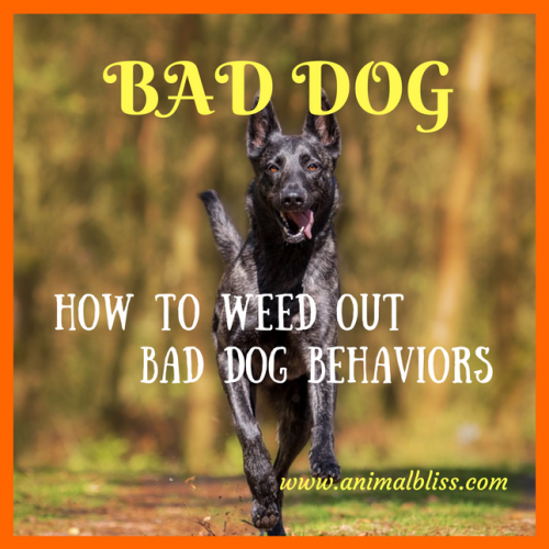 Bad Dog: How to Weed Out Bad Dog Behaviors