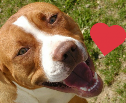 Could Owning a Dog Help Protect You Against Heart Disease?