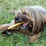 Taking Good Care of Your Dog's Teeth in 3 Simple Steps