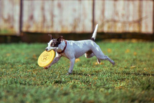 7 tips for beginner pet sitters
