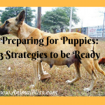 Preparing for Puppies: 3 Strategies to be Ready
