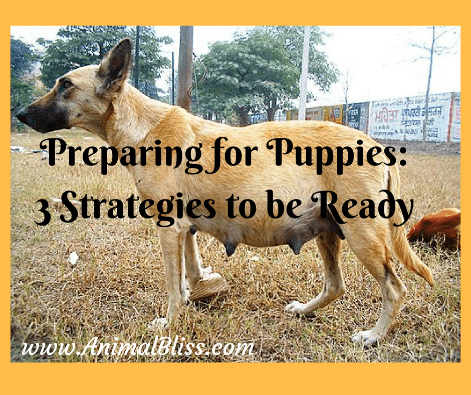 Preparing for Puppies: 3 Strategies to Get Ready for the Bundles of Joy