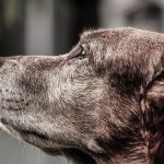 Pup Growing Old? 5 Ways To Care For Your Aging Dog