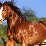 Regular Horse Grooming for a Healthy and Fit Horse