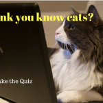 Think You Know Cats? Think again – Take the Cat Quiz. I got 80%