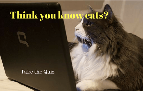 Think You Know Cats? Think again - Take the Cat Quiz. I got 80%