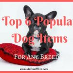 Top 6 Popular Dog Items Suiting Any Breed