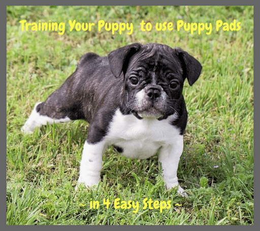 Training Your Puppy to use Puppy Pads in 4 easy steps