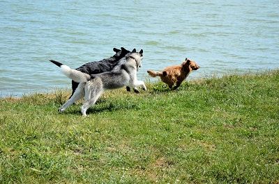 5 reasons to try dog daycare