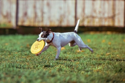 These are six of the most popular dog items pet owners should buy.