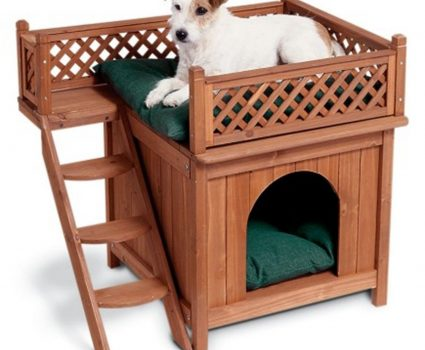 Building A Dog House – Is It An Easy Task?