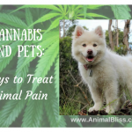 Cannabis and Pets: Another Way to Treat Animal Pain