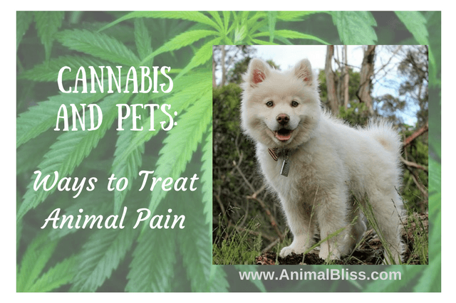 Ways to Treat Animal Pain