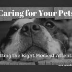 Caring For Your Pets: How To Get The Medical Attention They Need