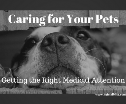 While caring for your pets, pay attention to any visual cues that may signal underlying health issues.