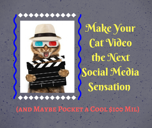 Make Your Cat Video the Next Social Media Sensation (and Maybe Pocket a Cool $100 Mil)