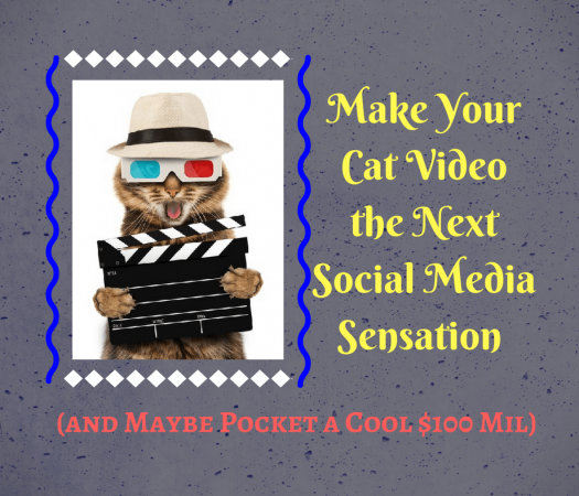 Make Your Cat Videos the Next Social Media Sensation (and Maybe Pocket a Cool $100 Mil)