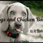 Dogs and Chicken Bones: Is it Safe for Dogs to Eat Chicken Bones?