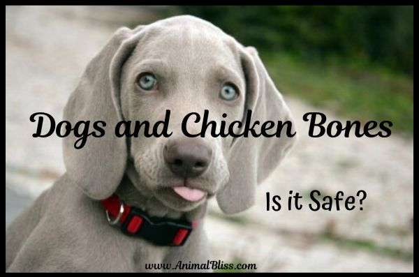Dogs and Chicken Bones - Is it Safe?