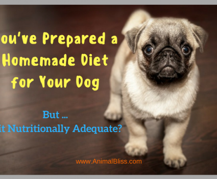 You're preparing a homemade diet for your dog but is it enough?