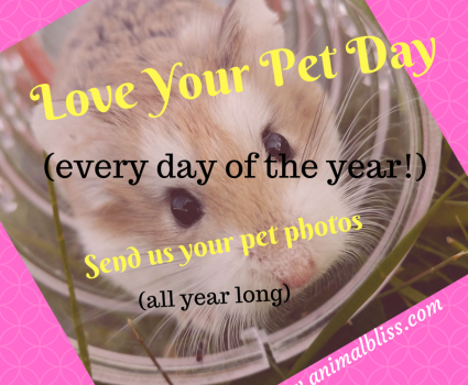 Love Your Pet Day, all year long! Come Share Your Pet Pics With Us