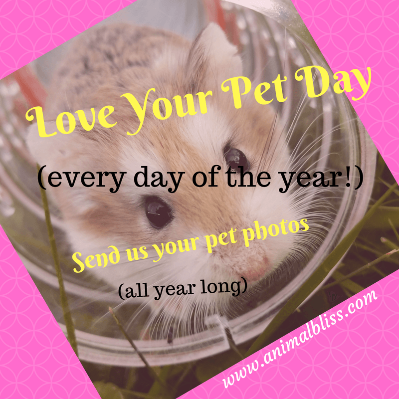 Love Your Pet Day, every day of the year. Send us your pet photos, all year long.