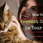 4 Easy Ways to Help Prevent Cancer in Your Cat