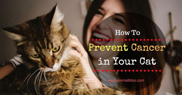 4 Ways to Help Prevent Cancer in Your Cat