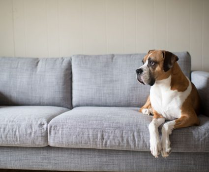 Severe Shedding: How to Deal with Excessive Pet Fur