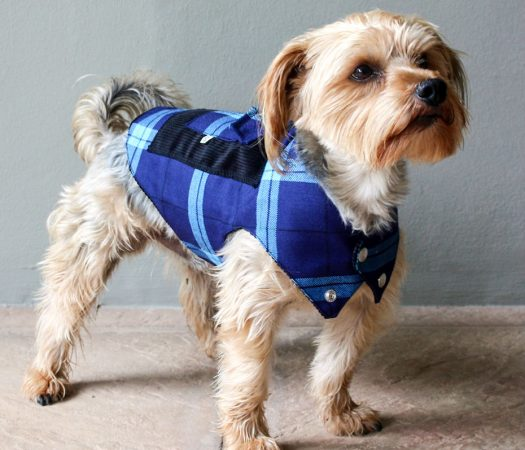 In a campaign to help pets unite against human trafficking, pet clothing brand Lulu & Robbie offers UN-endorsed anti-trafficking Blueheart tartan.