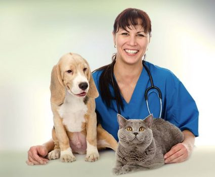 How Technology Plays a Role in Veterinary Care – Pet Health