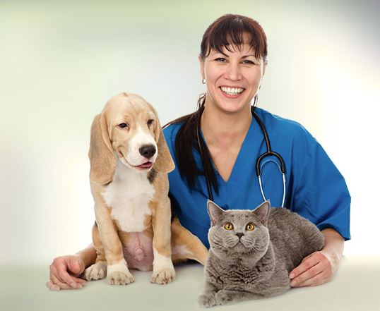 How technology plays a role in veterinary care.