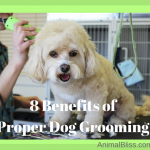 8 Benefits of Proper Dog Grooming for You and Your Dog