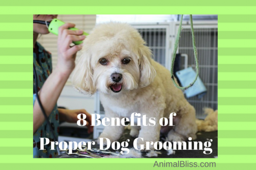 There are many benefits to proper dog grooming, and it is necessary for maintaining the health and happiness of your pup. Click here for more.