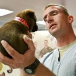 5 Things You Should Know if You Want to Become a Veterinarian