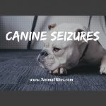 Canine Seizures: What to do if Your Dog is Suffering from Seizures