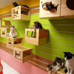 Cat Playroom – 10 Ideas for Creating a Playroom in Your Home