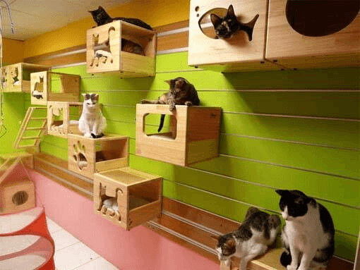 10 Ideas for Creating a Cat Playroom in Your Home