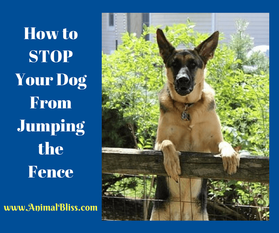 How to Stop Your Dog From Jumping the Fence