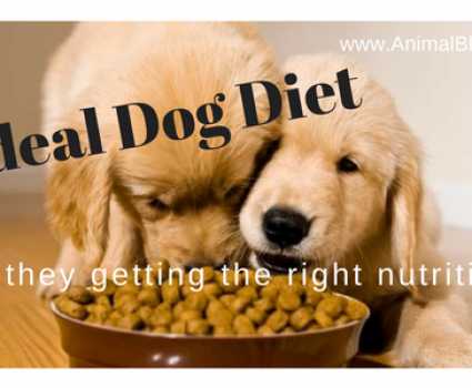 Ideal Dog Diet – How to Ensure Your Dog Gets the Right Nutrition