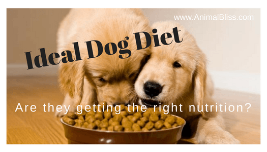 Ideal Dog Diet - How to Ensure Your Dog Gets the Right Nutrition