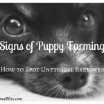 Signs of Puppy Farming – How to Spot Unethical Breeders