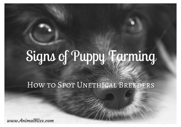 Do you know how to spot signs of puppy farming?