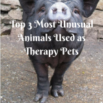 Top 3 Most Unusual Animals Used as Therapy Pets