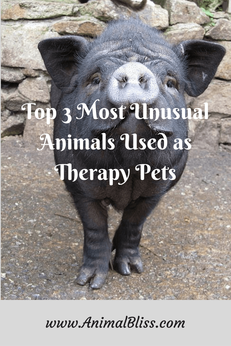 Cats and dogs aren't the only Animals Used as Therapy Pets anymore.