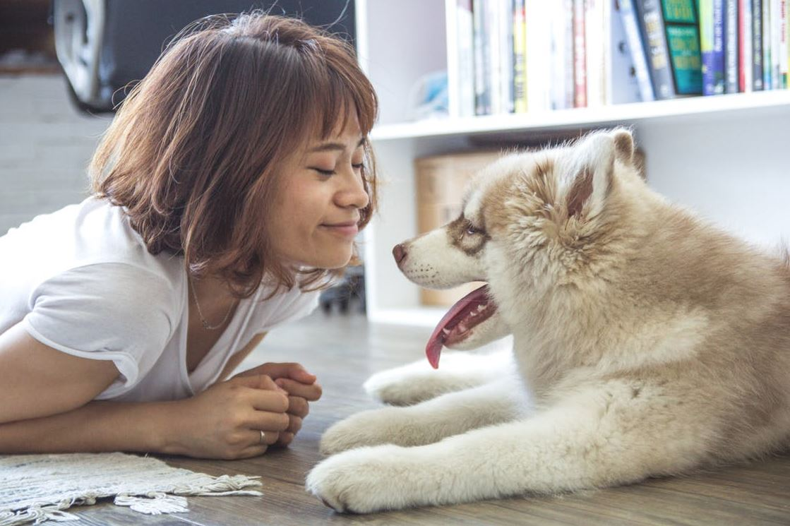 5 Problems to Avoid While Owning a Dog