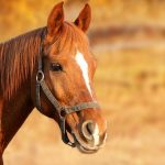 Buying a Horse – Important Things to Think About Before Getting a Horse