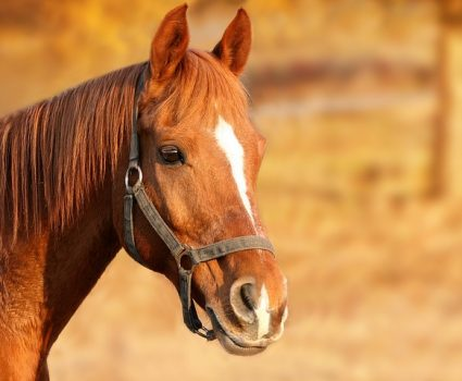 Here are only a few of the major considerations you should think about if you're thinking about buying a horse.
