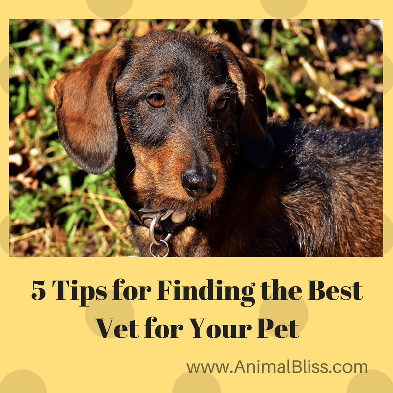 Finding the best vet for your pet in your area is essential, especially if faced with an emergency.